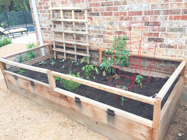 See what we've planted in our Fall Garden!