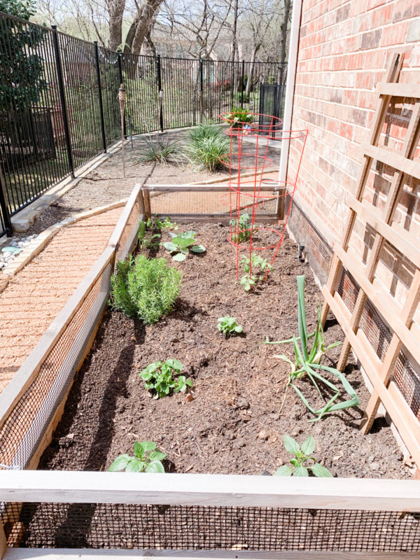 See what we planted in our Veggie Garden this year. Texas Garden | Vegetable Garden | DIY Raised Garden | Raised Garden Bed | Veggie Garden | Rain Gauge | Veggie Garden Ideas | Vegetable Garden Layout | Garden Design | Outdoors | Homesteading | Grow Your Own